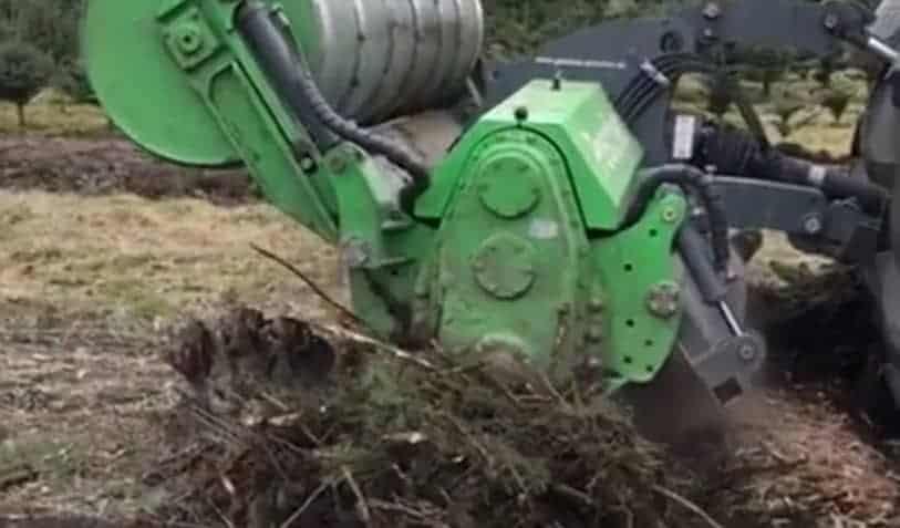 Forstfräse pulverisiert Baumwurzel