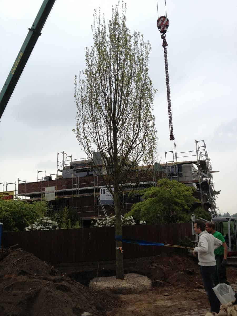 Grossbaumverpflanzung (1)