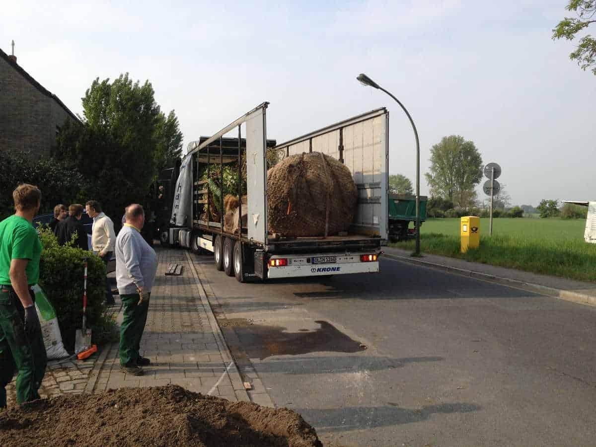 Grossbaumverpflanzung (2)